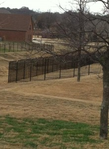 Iron Aaa Burleson Fence