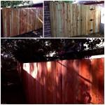 western red cedar fence